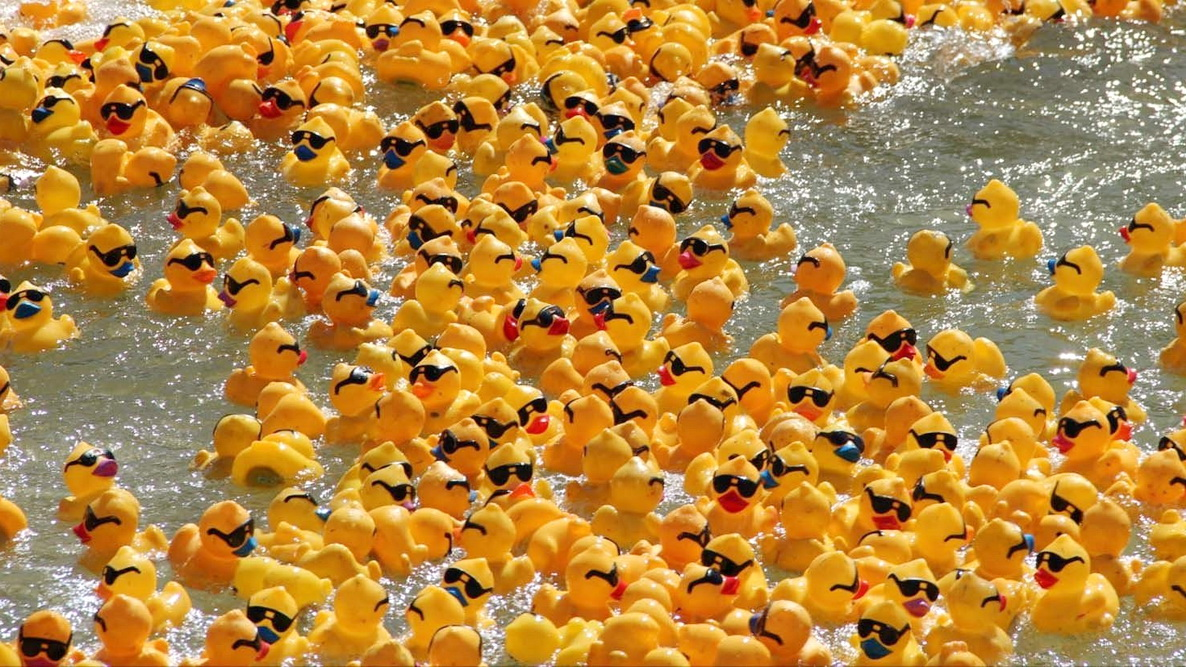 Фото: Chicago Ducky Derby